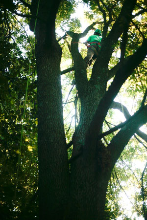 About Greenhaven Tree Care