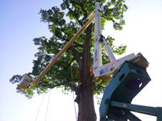 Greenhaven Tree Care Services - Pruning